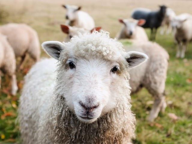 El veganismo y la fundación Santuario Gaia