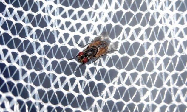 Los tipos de mosquitera más comunes
